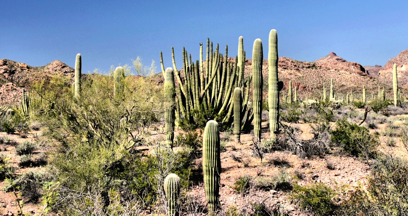 le cactus protection anti-ondes ?
